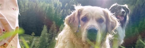 Hunde auf Wiese im Detail