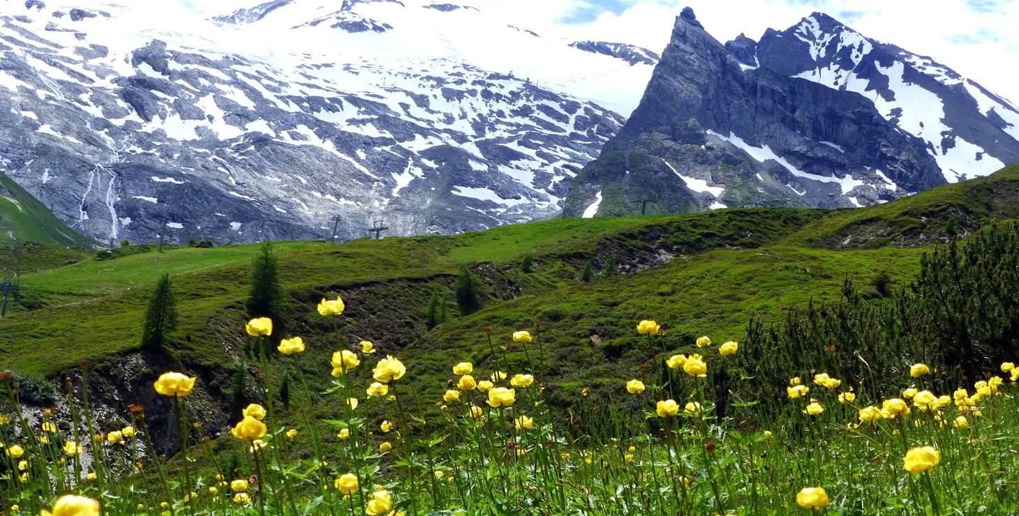Blumenwiese im Frühling vor Berglandschaft